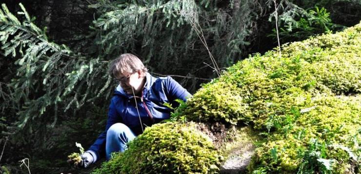 Molte Fiabe hanno luogo nei boschi: la foresta della Val di Fiemme nei piatti dello Chef Alessandro Gilmozzi